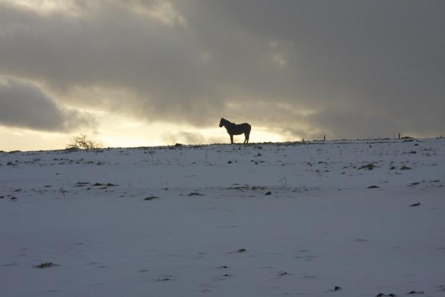 horsesolo.jpg