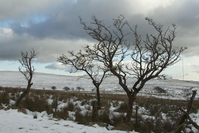 trees3.jpg
