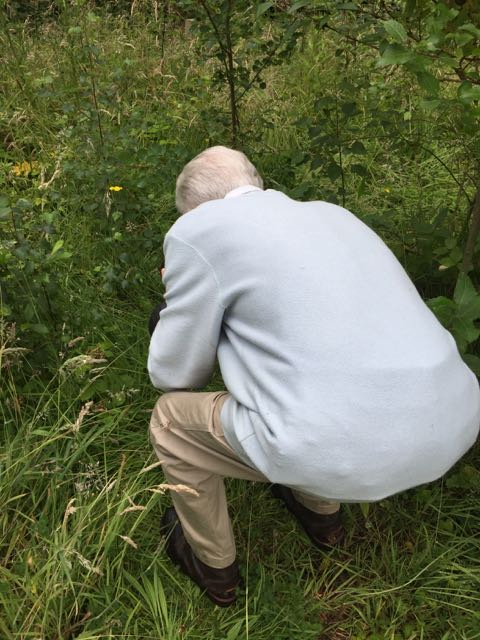 Along came dad seeking the wildlife in a section of scrubland, Orangefield park, Belfast