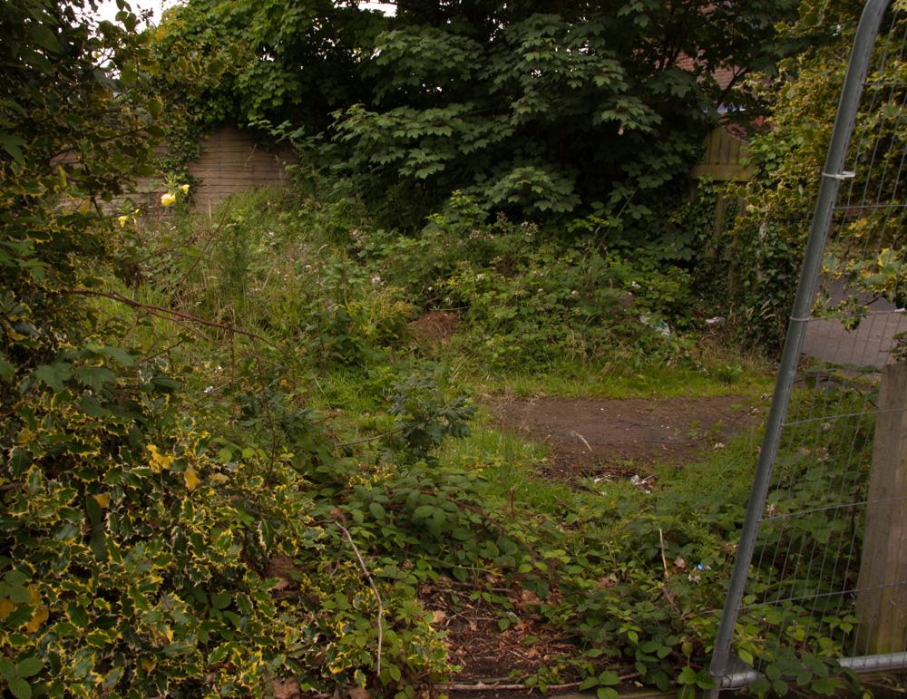 Scrubland, nature conservation, Orangefield park, Belfast