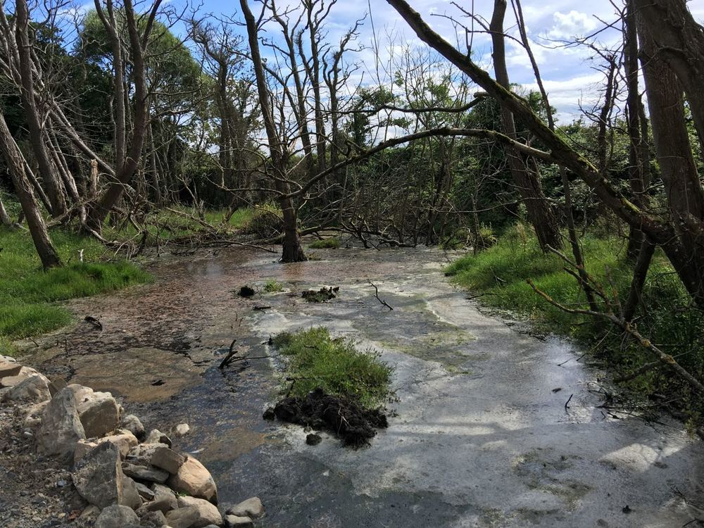 Sea water breaching into the grounds, damaging trees