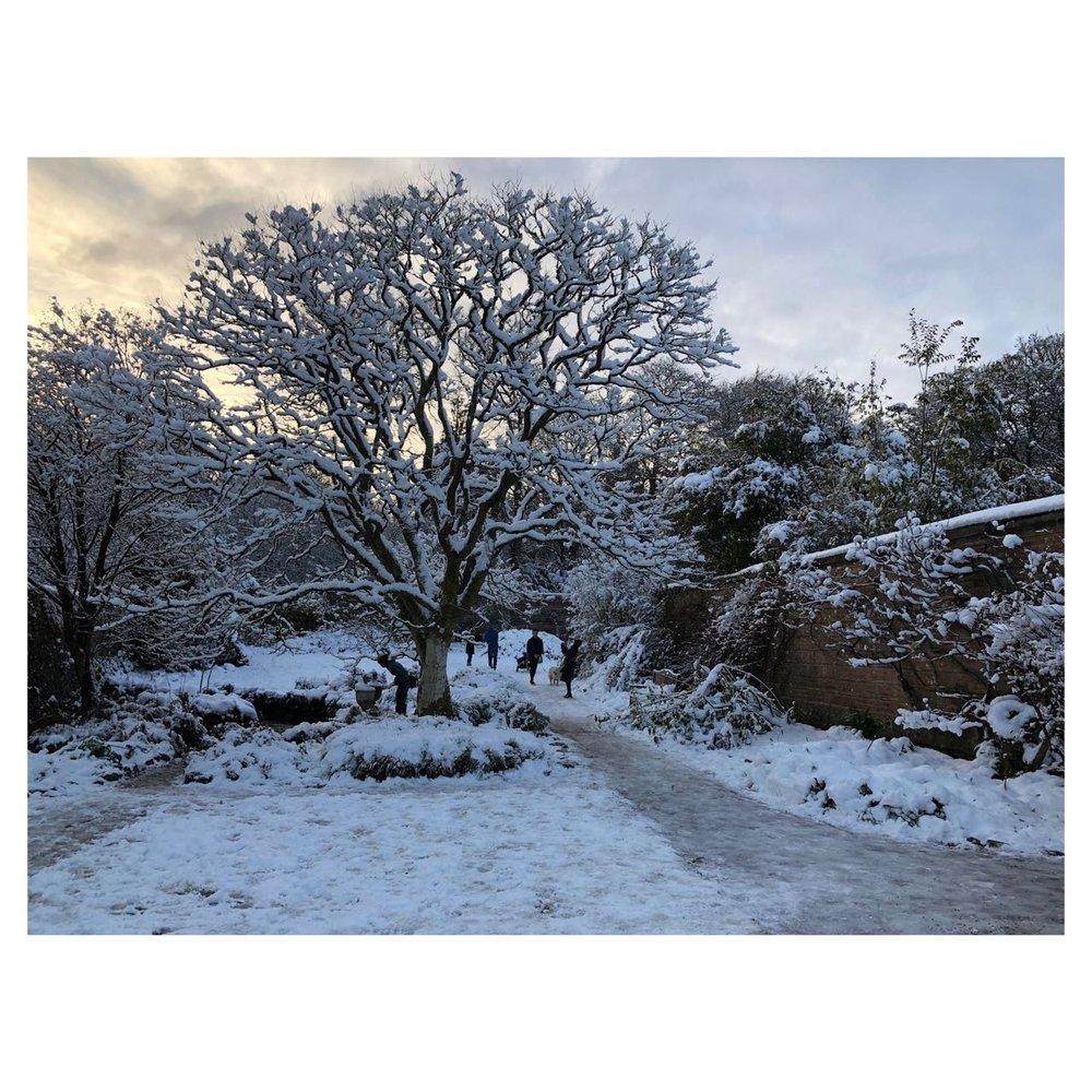 Leafless yet clothed in snow. Tranquility of nature when the snow falls, silently