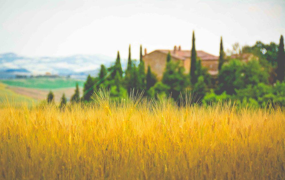 Tuscany 2-76.jpg