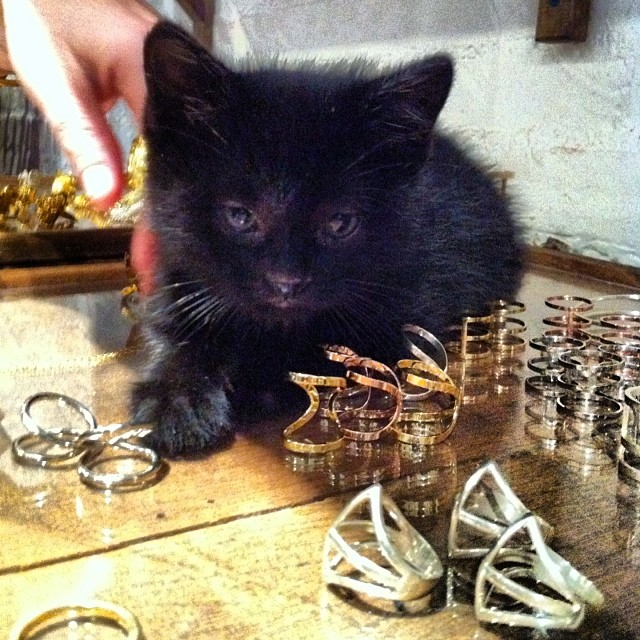 This kitten loves Campbell.