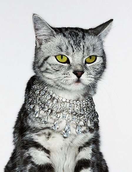 maybelline :      That moment when you realize your cat has better jewelry than you.        fancy cat