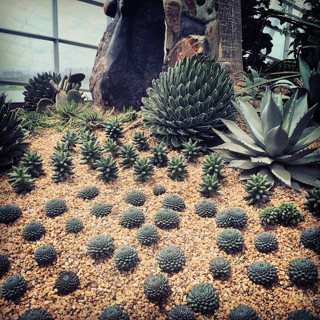 Succulent inspiration #Singapore  (at Flower Dome, Gardens by the Bay)