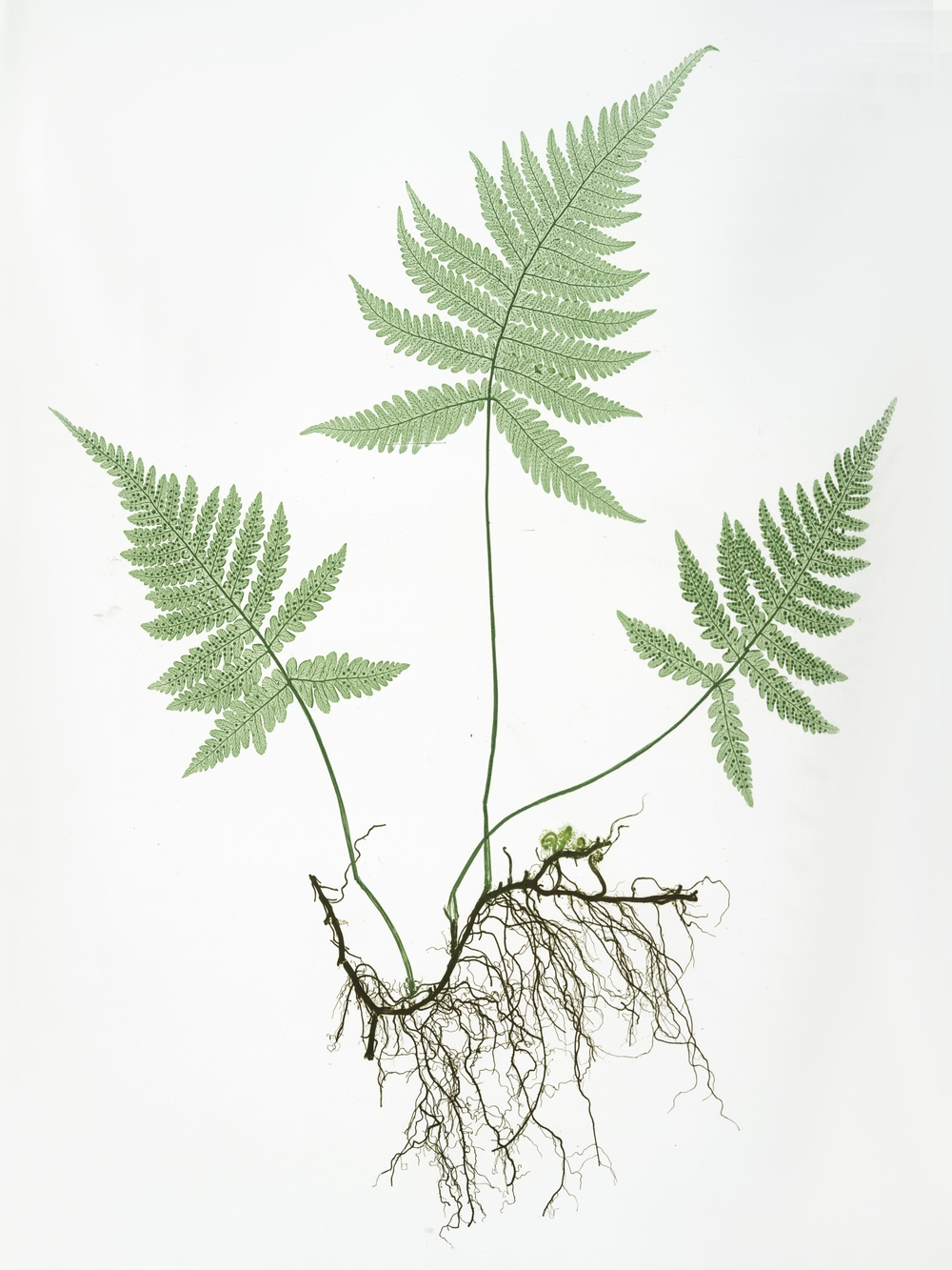 botanical_2.jpg