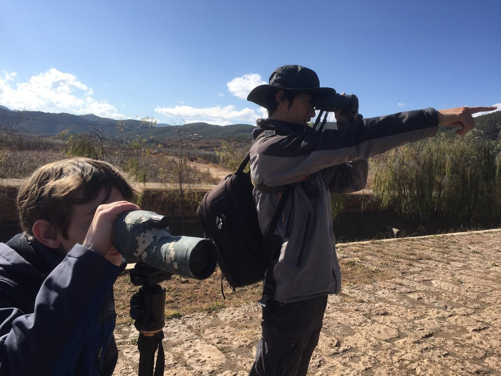 Birdwatching 2.JPG