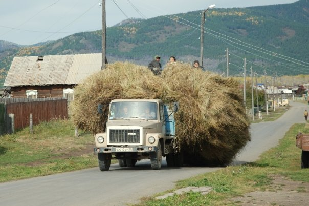 . Siberian farmers bringing in a harvest of hay.