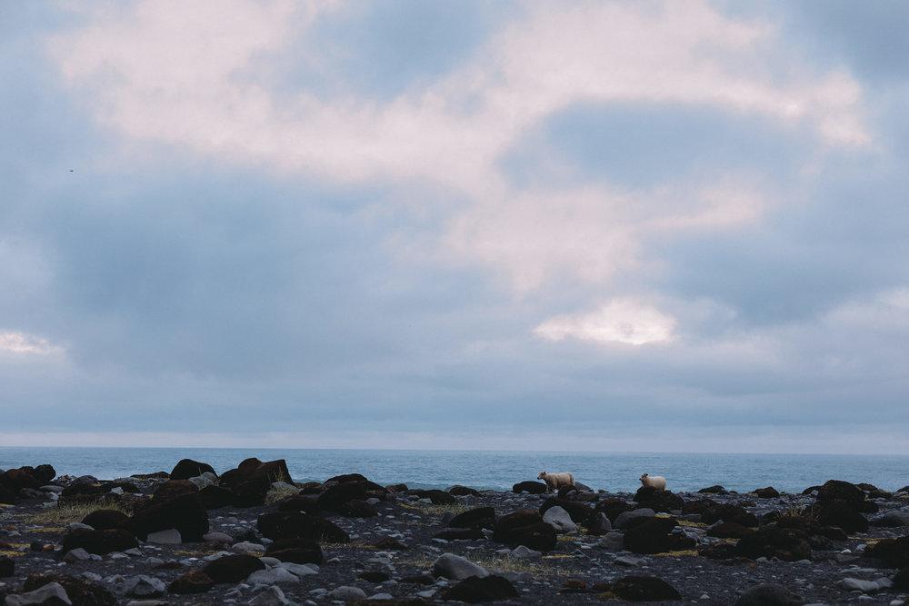 ICELAND_PROPOSAL_SOUTHCOAST-193.jpg