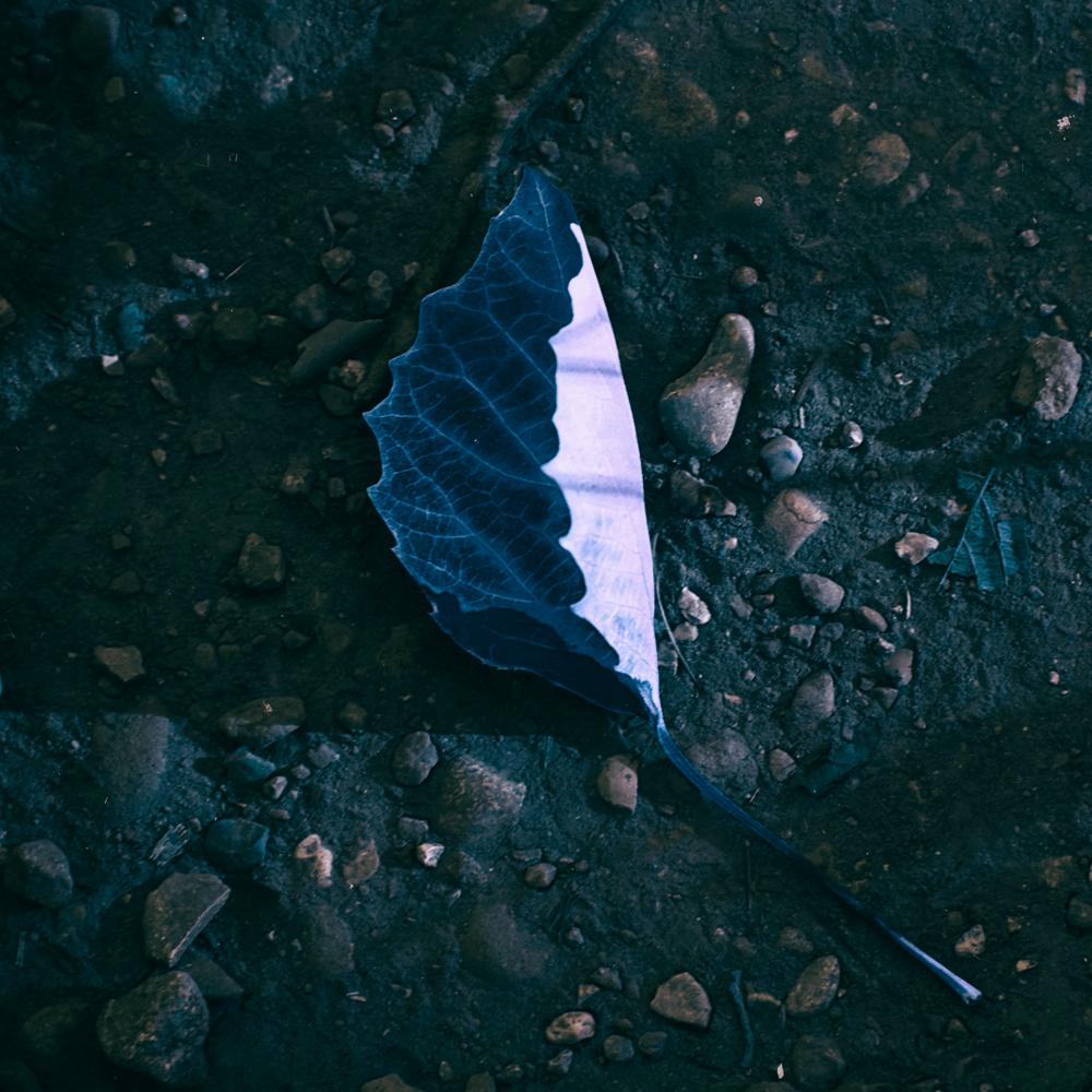 Kayobe - Hidden EP.png
