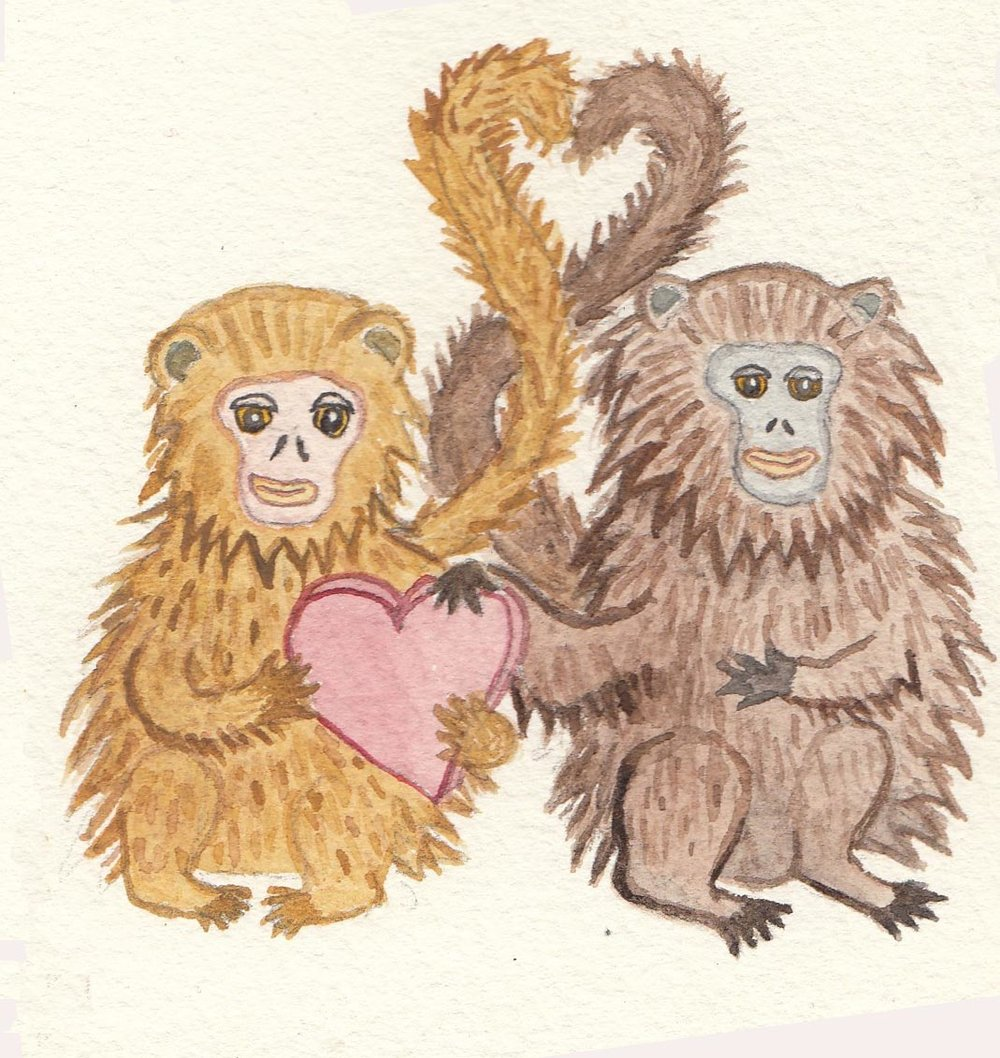 monkeys yellow and brown.jpg