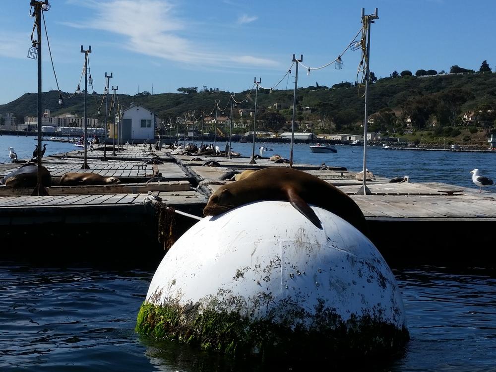 sea lion #2.jpg
