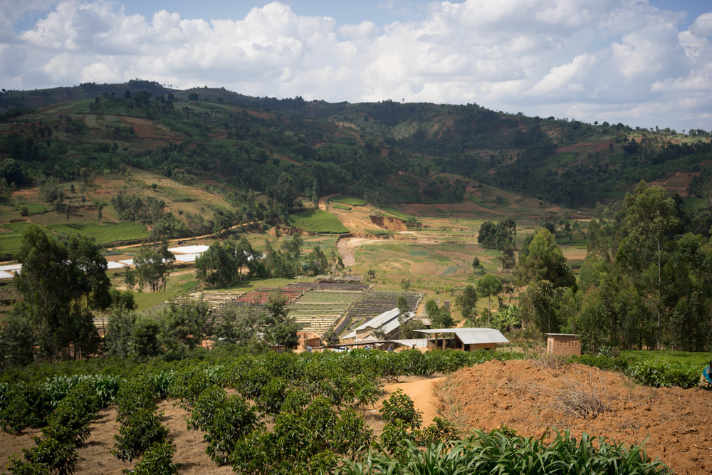 Overview of Buziraguhindwa. Lots from collection points at Nyabihanga and Sehe are also processed here.