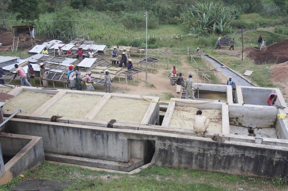 Wet fermentation of coffee in Sidamo