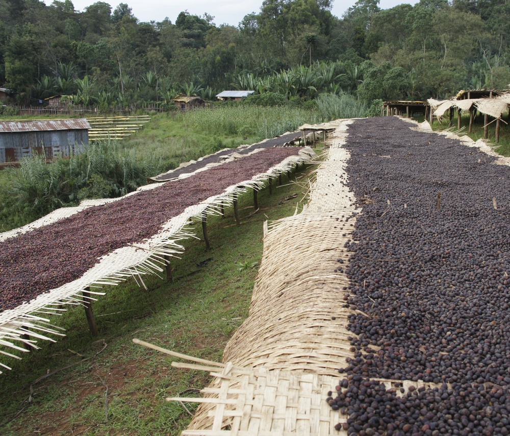 "Drying of ""natural"" coffees in Yirgacheffe"