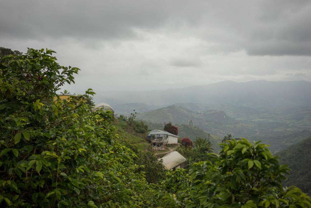 Tarqui, Huila