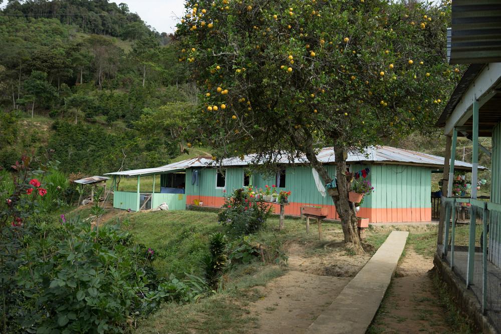 Finca Bella Vista, Planadas, Tolima.