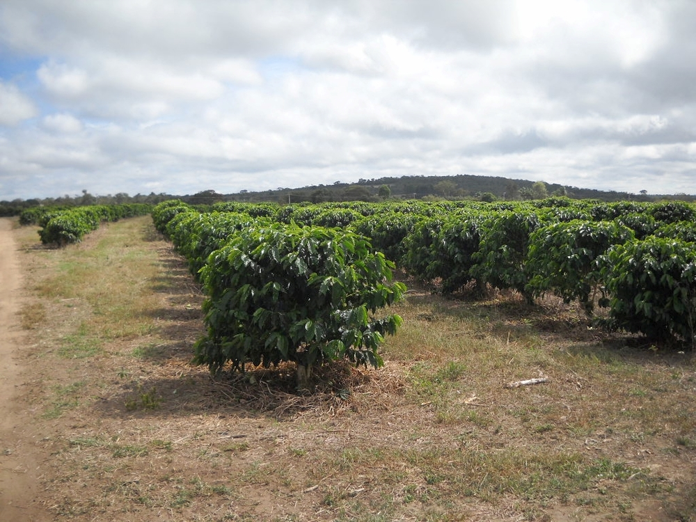 Fazenda Santa Barbara