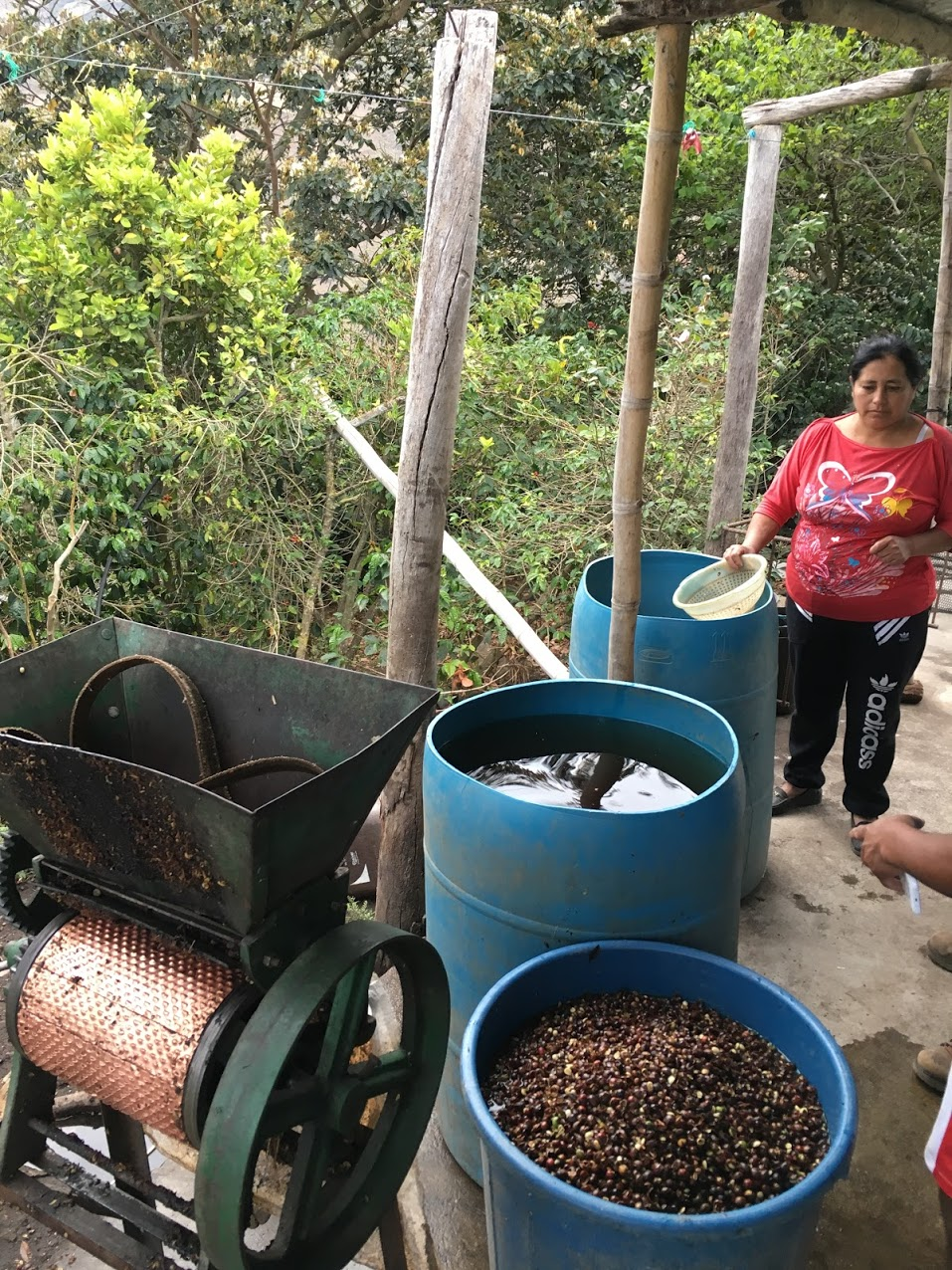 Dorys Tiamana: One of the higher scoring coffees, produced with a typical small holder set-up.