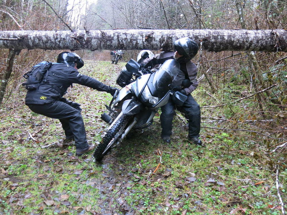 Wrestling a KLR under a fallen tree.  Vancouver Island - North, Canada