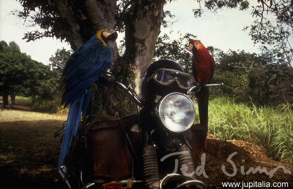 N8-Macaws.jpg