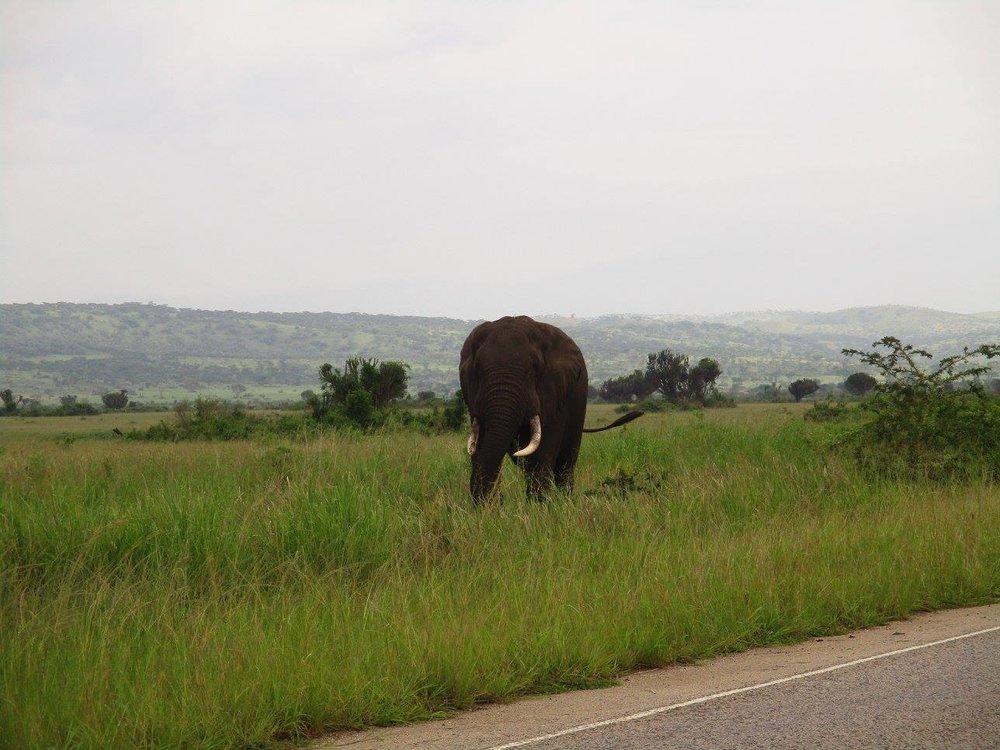 Linda-Bick-Elephant-Africa-Motorcycle-Adventure-Rider-Radio.jpg