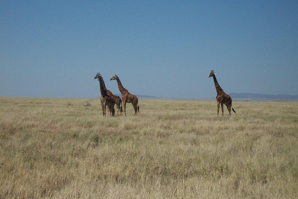 Tanzania (47).jpg
