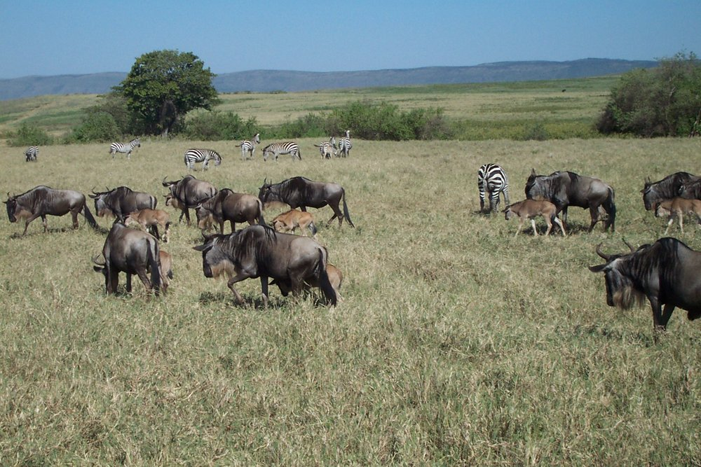 Tanzania (23).jpg