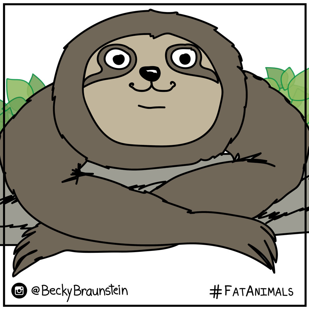 Sloth animal-01.jpg