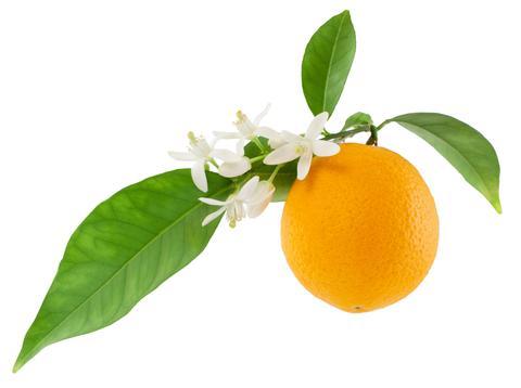 orange_flower_ea147bdc-c0f1-4a87-98c6-a20197c27cc2_large.jpg