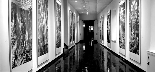 Patricia-Olynyk_Sensing-Terrains_Installation_05_Hallway-installation.jpg