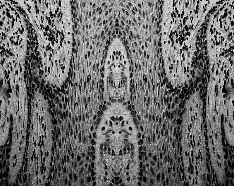 Patricia-Olynyk_Sensing-Terrains_NAS_02_Sight-II_detail.jpg