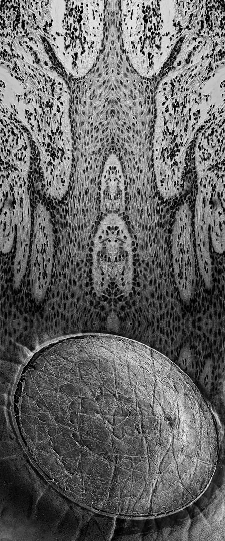 Patricia-Olynyk_Sensing-Terrains_NAS_02_Sight-II.jpg