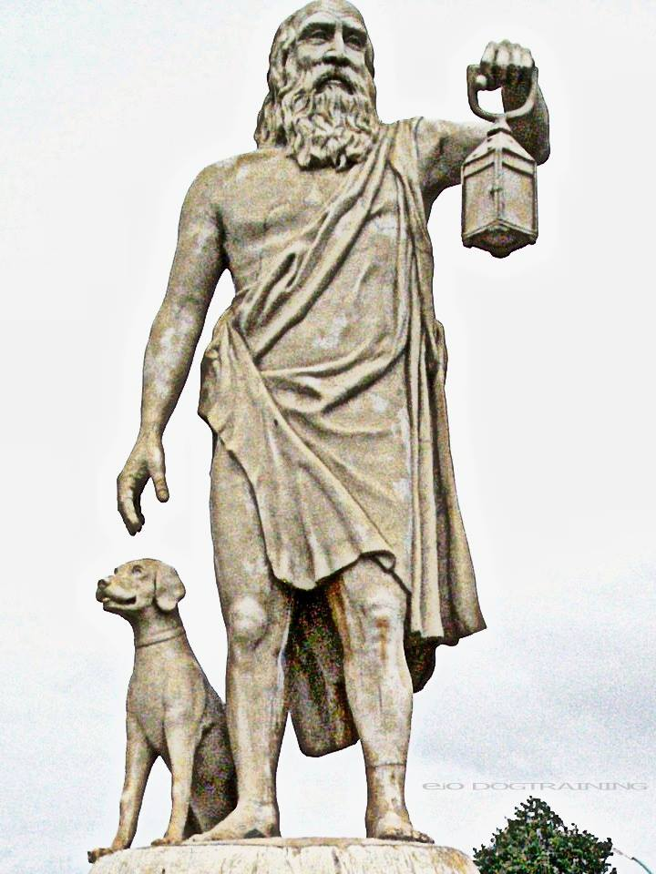 •Farm dogs in ancient Greece wore similar collars to the spike-studded ones their medieval successors would wear. A sheepdog, which had to be white in order to be visible at night, was given a leather collar studded with sharp nails pushed  through it, called a melium. This protected his neck from wolf maulings as he defended his flock. It is interesting to note that while the sheepdogs had to be white, the farmhouse dogs had to be black -- so they could conceal themselves better to surprise intruders.