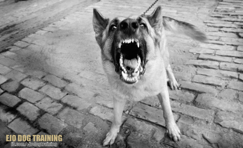 """• Aggression itself is usually defined as """"the intent to do harm"""". Many dogs show displays of aggression such as barking, growling, or snapping in the air, which are considered distance-increasing actions intended to get the person or dog t  o move away. Most dogs display of aggression is defensive, harming another only if they perceive that they have no option, or Scooby Doo out of the scene. Other dogs may develop rare (very rare) aggressive behavior due to medical reasons. Dog aggression is a common dog behavior, and can be seen in ALL breeds of dogs. Lack of exercise is not a cause of aggressive behavior, although exercise boosts serotonin levels, which offsets stress hormones such as cortisol, and can complement a behavior modification program. Depending on the motivation and consistency of the owner, most dog aggressive acts are never too late to treat."""