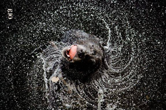 """• The phrase """"raining cats and dogs"""" originated in seventeenth-century England. During heavy rainstorms, many homeless animals would drown and float down the streets, giving the appearance that it had actually rained cats and dogs."""