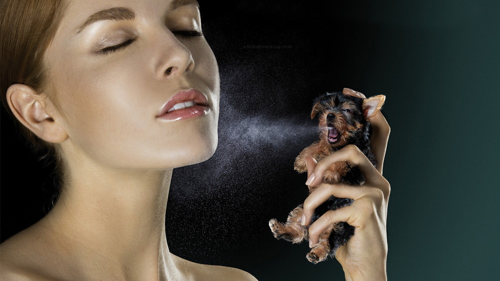 Your skinsmells as strong and identical to a dog as perfume. Your unique odorhas the same attachments and mental connections upon recognition as bacon and cafe' in the morning does to us. Change your clothes, put on a mask and scrub your skin...your dog can still sniff you out of a crowd.