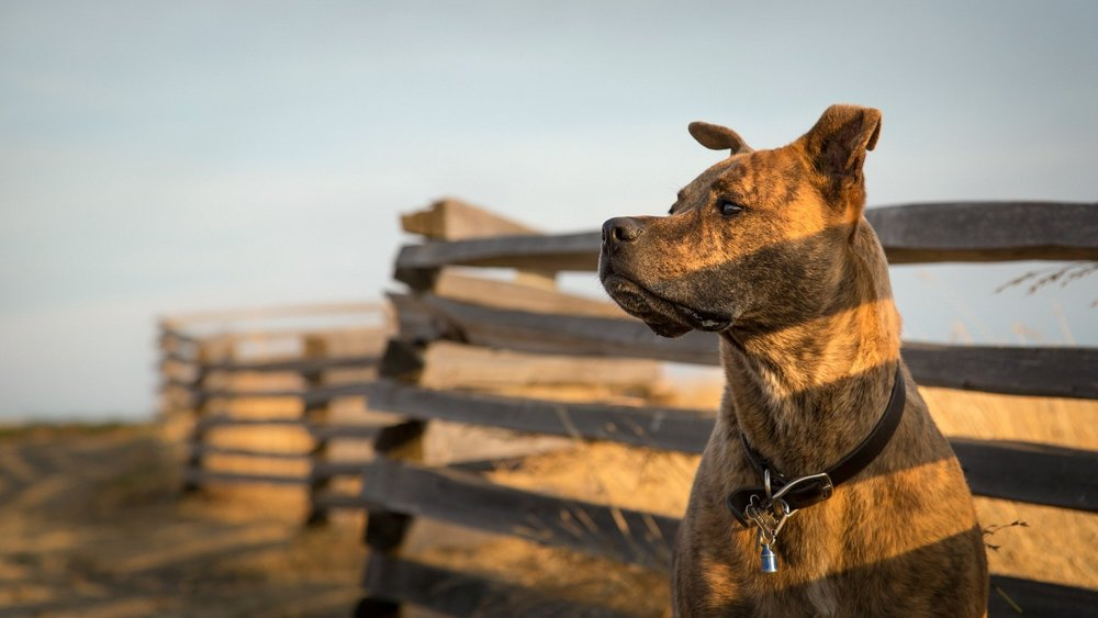 WARNING - After reading through these entries you will have a much greater appreciation for your dog.