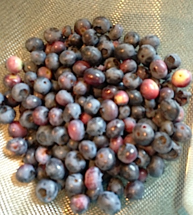 Blueberries from the garden.