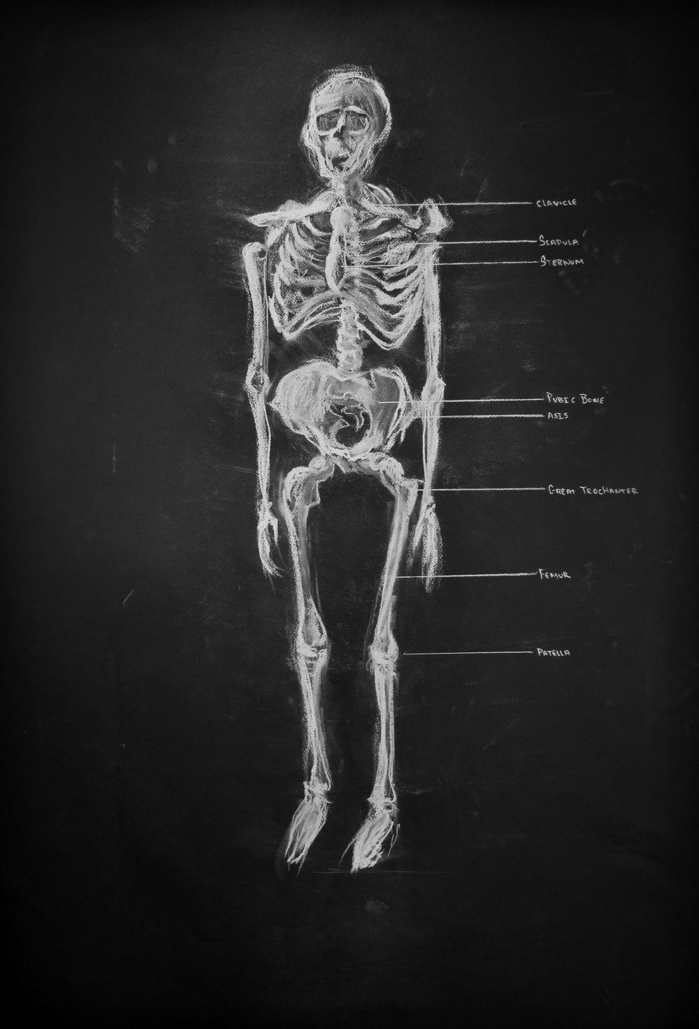 20121112-Skeleton.jpg