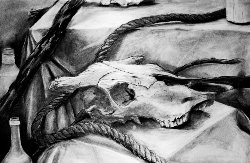 20121112-Cow skull still life.jpg