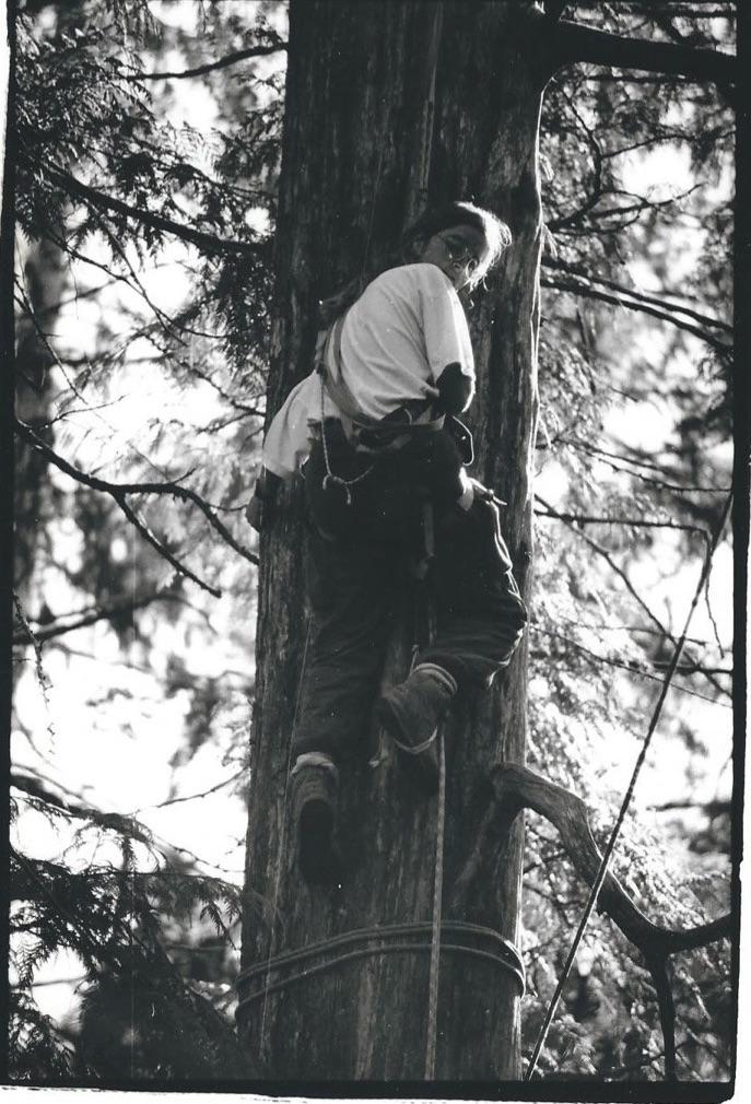 Clayoquot Treeclimbing