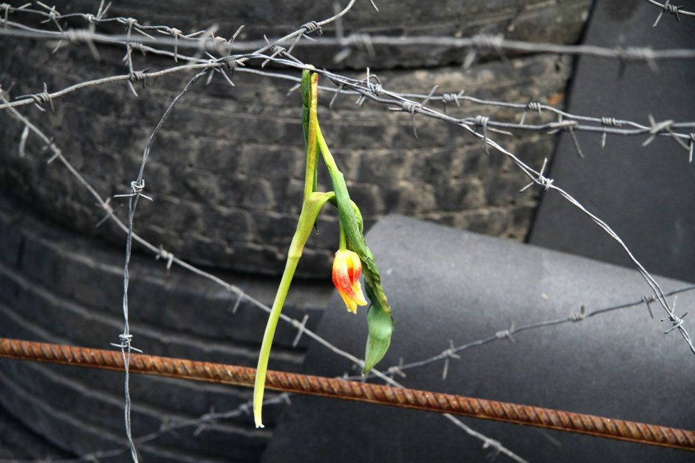 A rose wilts over razor wire in Maidan Nezalezhnosti, Kiev. A month prior the square had been mainstage for the Euromaidan protests that ousted former Ukrainian president Viktor Yanukovych. (2014,  Guernica Magazine )