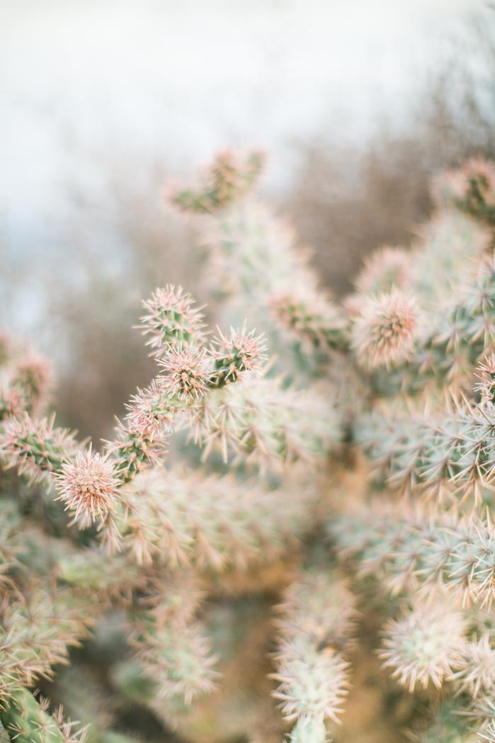 cactus_stockphoto.jpg