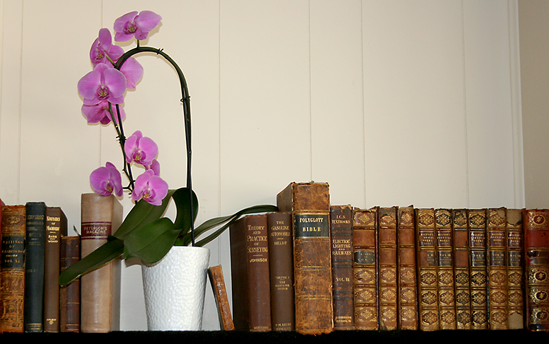 orchid Books 6x8.png