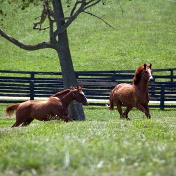 bluegrass horses (2).jpg