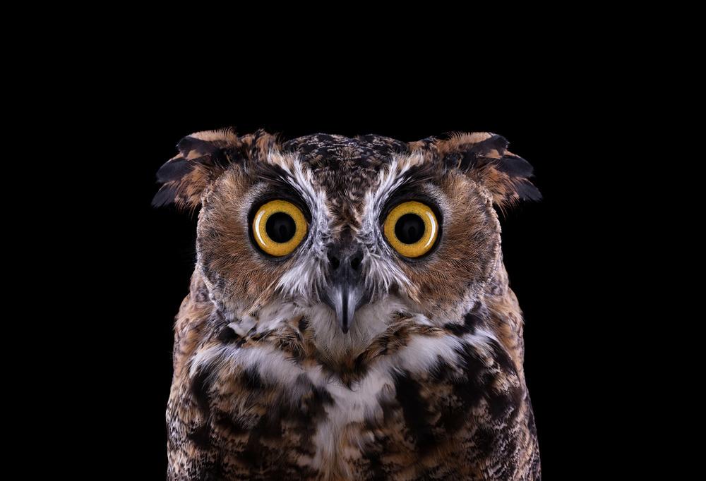 Great Horned Owl #3, Espanola, NM, 2011 by Brad Wilson