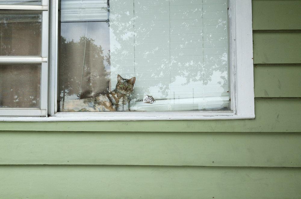 E A - 18-08_Eric-Acosta_NOLA_Window_Cat.jpg