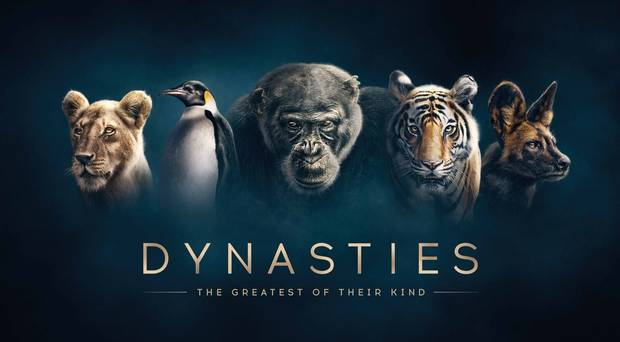 BBC ONE DYNASTIES // DAVID ATTENBOROUGH - It has been an honour to score the BBC One series 'Dynasties', presented by Sir David Attenborough. The score has been a labour of love working with my good friend and co-composer, Will Slater.The flagship series will be first broadcast in the UK on November 11th, 2018 at 8:30pm, then broadcast worldwide soon after.The Soundtrack will be available very soon on Silva Screen records.Here's some info: Sir David Attenborough brings you Dynasties, the new series from BBC Earth.Follow the true stories of five of the world's most celebrated, yet endangered animals; penguins, chimpanzees, lions, painted wolves and tigers. Each in a heroic struggle against rivals and against the forces of nature, these families fight for their own survival and for the future of their dynasties.trailer link